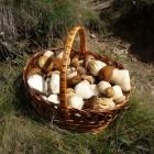 заказать белые грибы