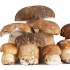 цена свежих белых грибов