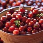 где купить ягоду бруснику