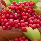 калина ягода цена