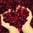 купить ягоду клюкву