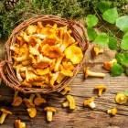 заказать грибы лисички свежие
